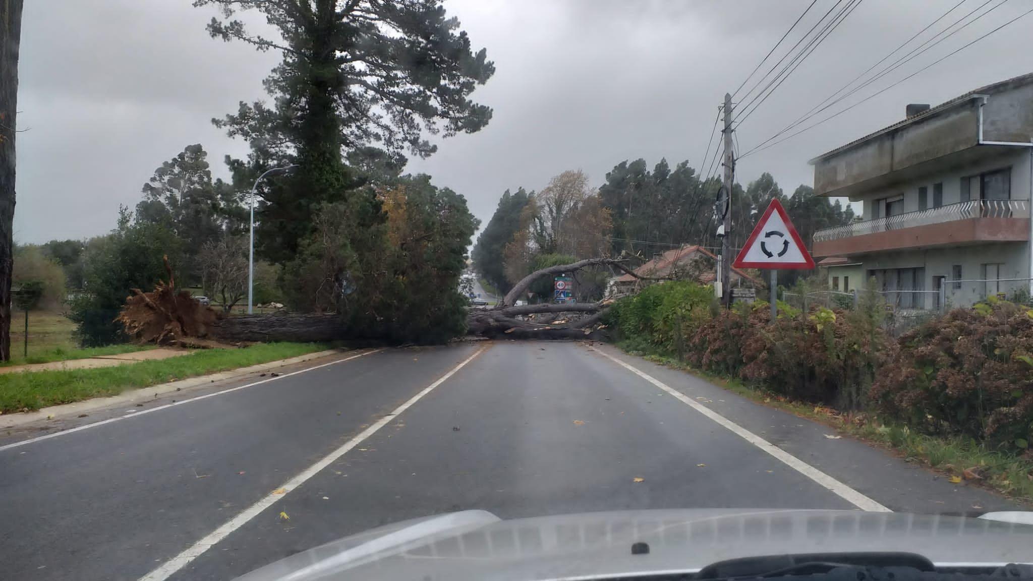 Árbol sobre la carretera en Montrove, en el concello coruñés de Oleiros