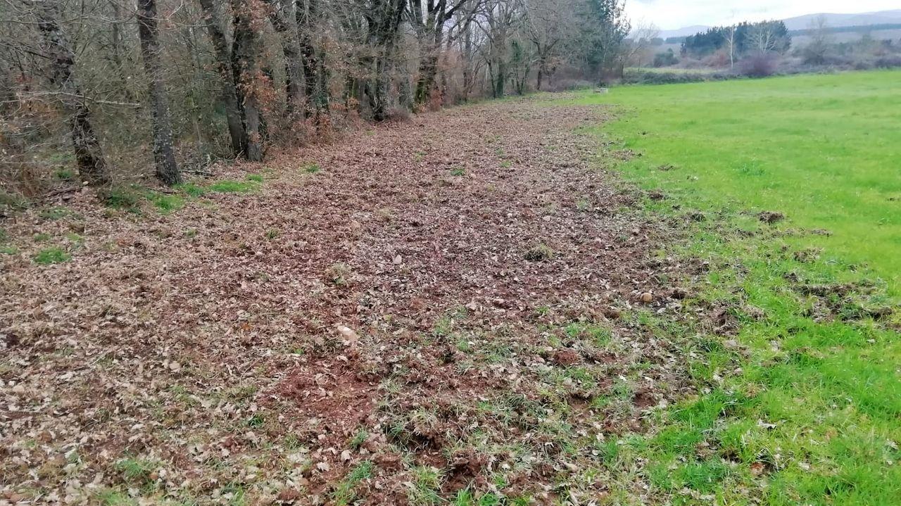 Os xabarís removeron as terras nas fincas que o gandeiro Luis López aproveita para pasto