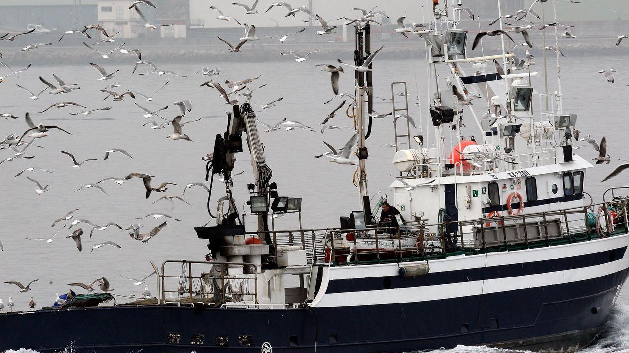 O Roncudo entregó su tesoro: las imágenes del primer día de percebe.Buscando alimento, las gaviotas siguen a los pesqueros, como este, en A Coruña, en una imagen de archivo