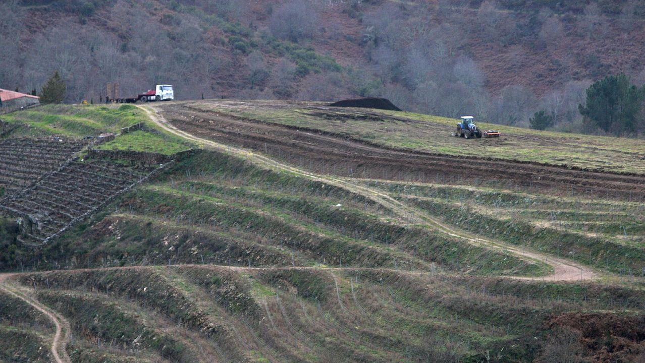 Explosión de color en la Ribeira Sacra.Ampliación de los viñedos en el entorno de la bodega Regina Viarum en el 2015
