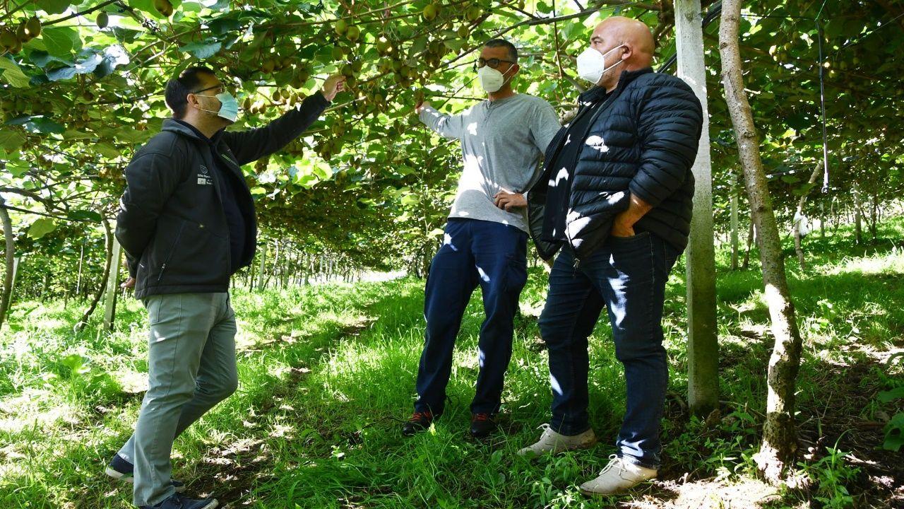 Imagen de la visita a la plantación de kiwi en Abegondo