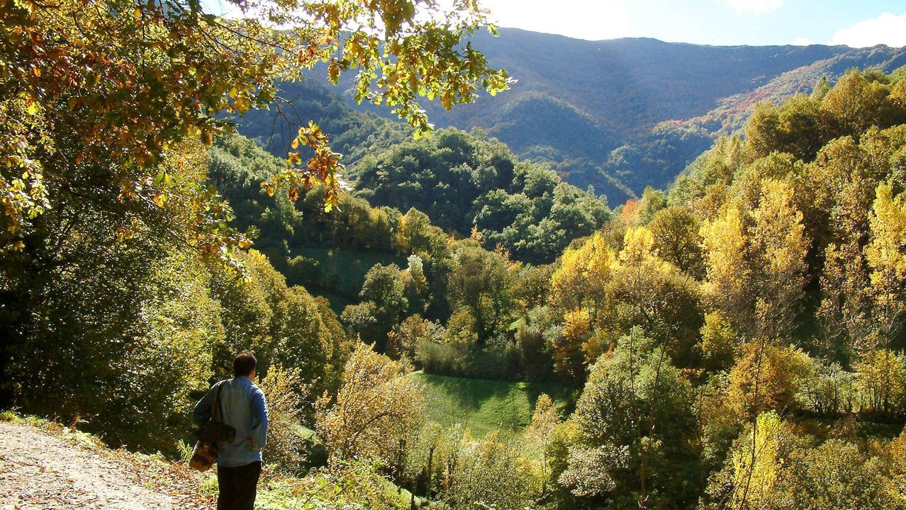 Coia se viste de fiesta por la noche.El bosque de la Devesa da Rogueira se extiende por las faldas del monte Formigueiros