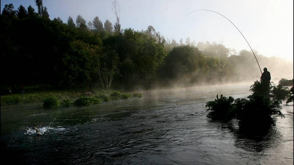 salmón, pescador, campanu, pesca