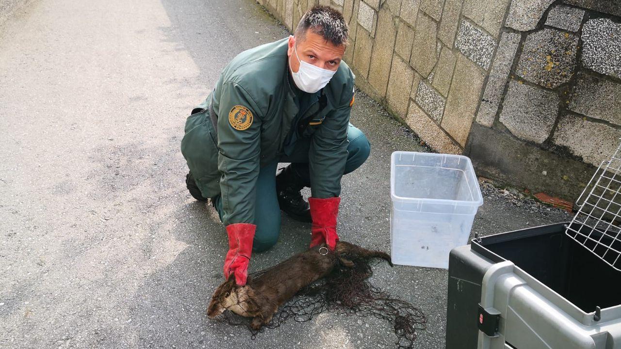 La Guardia Civiltoma muestras del agua del Lérez.Probablemente diluida por el mar, ya ha desaparecido la mancha que apareció este jueves por la tarde en A Marosa