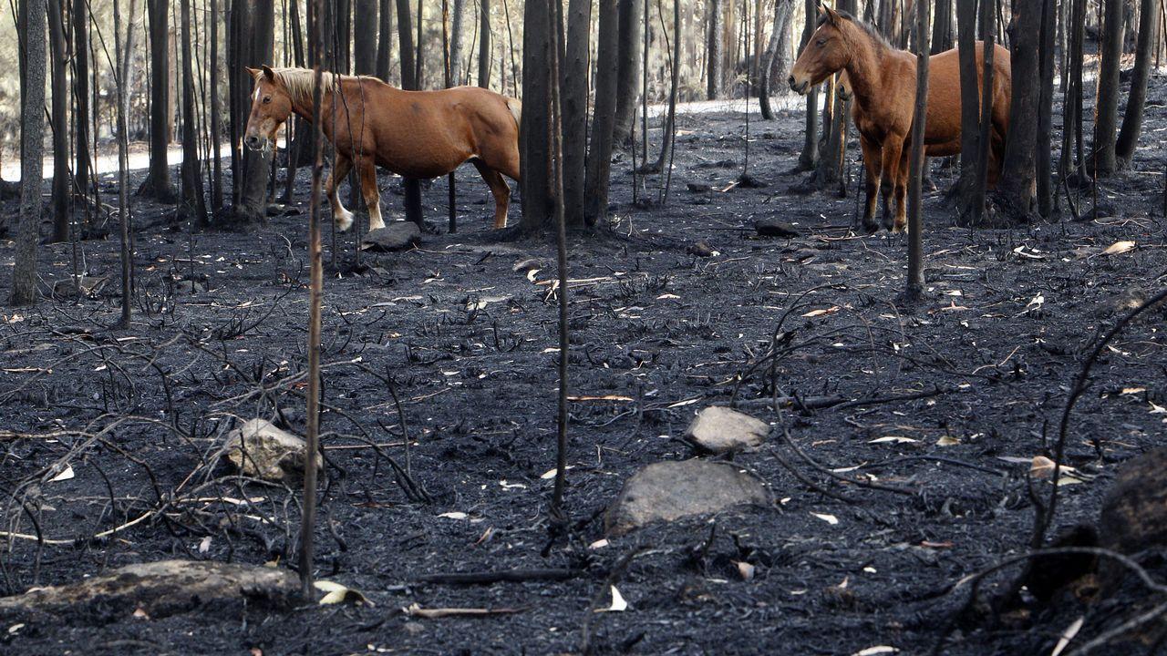 As Neves, en la provincia de Pontevedra, fue uno de los municipios más afectados