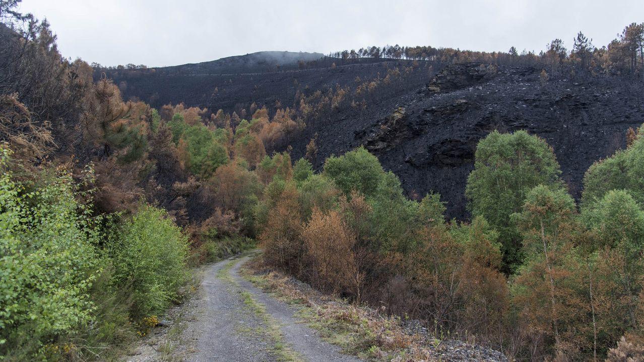 El 25N, en imágenes.Eefctos de un incendio forestal que se produjo en la parroquia de Trascastro en abril del 2017