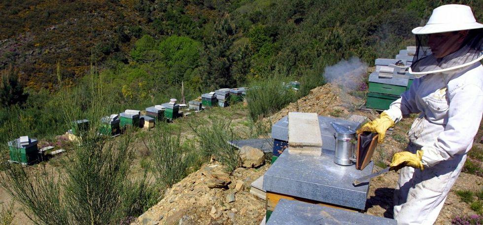 Las colmenas de la marca lucense Mel da Anta están en zonas de alta montaña de Galicia.
