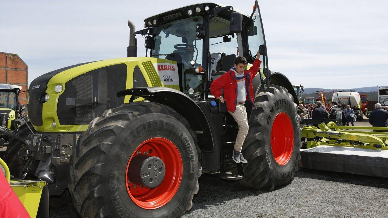 Rodeiro, el concello con sesenta jamones por cada vecino.Las granjas gallegas realizaron importantes inversiones para el bienestar de las vacas
