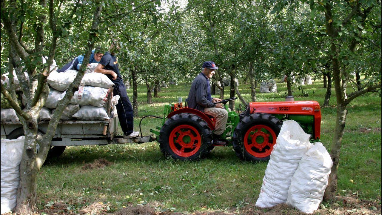Cervantes recuperó la histórica feria de ganado.Adelaida pastando en la explotación de Friol hace unos días