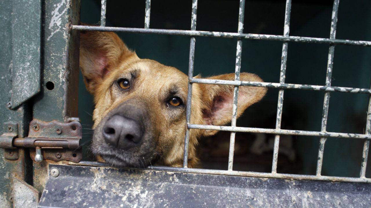 Un perro, en la Protectora de Animales y Plantas de Lugo