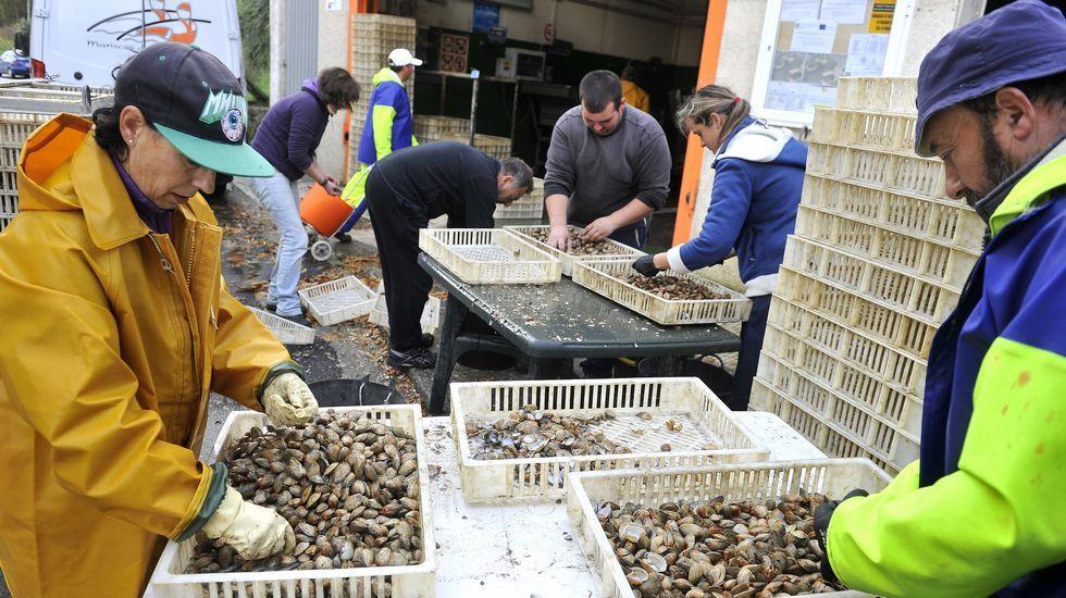 Mariscadores de Fene ayer trabajando con la almeja