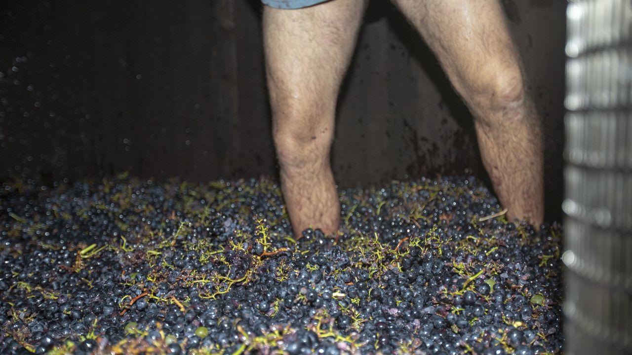 El pisado de la uva require cierta técnica para evitar que pasen verdores al vino