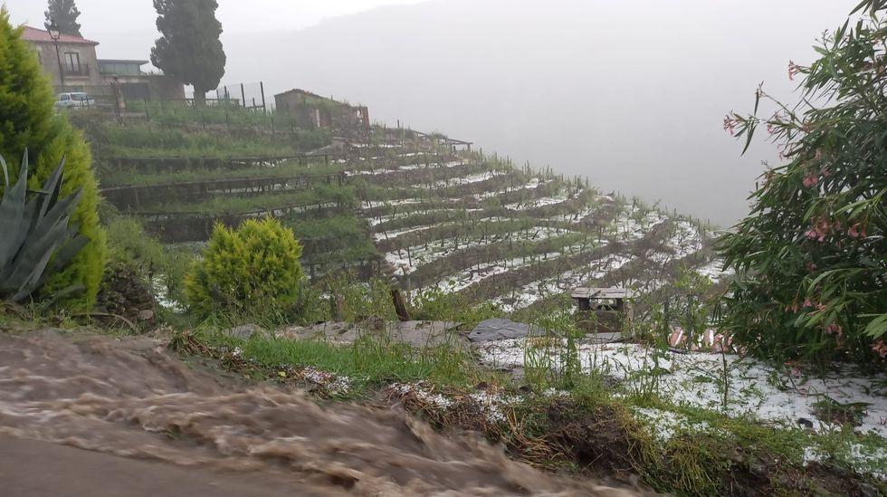 Aspecto que presentaba la zona de viñedos en bancales de San Fiz, en Chantada, media hora después de la primera descarga de granizo