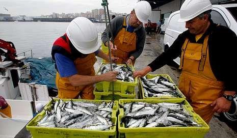La sardina escaseó el año pasado en las costas gallegas.
