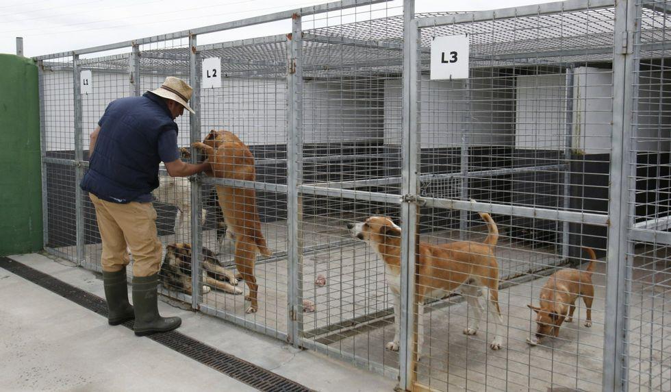 La Diputación tiene tres perreras (en la foto, la de Xinzo).