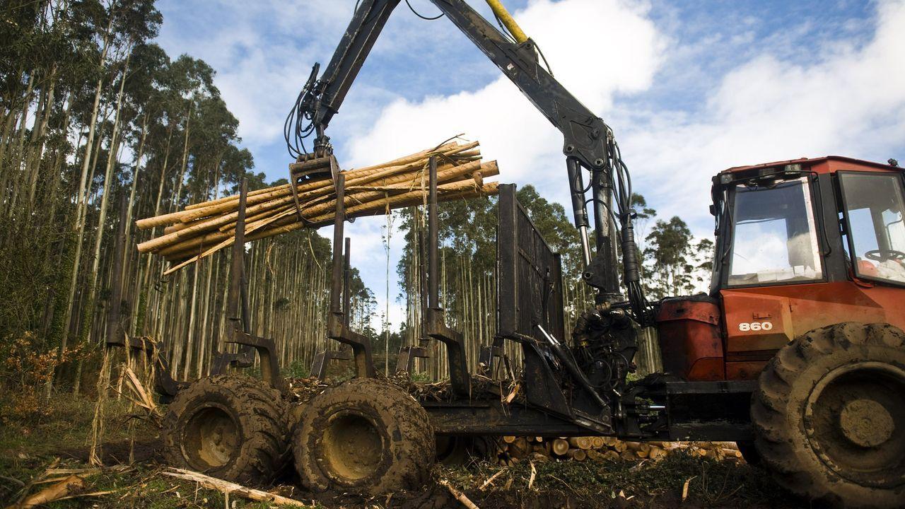 Las empresas madereras deberán depositar una garantía en el Concello