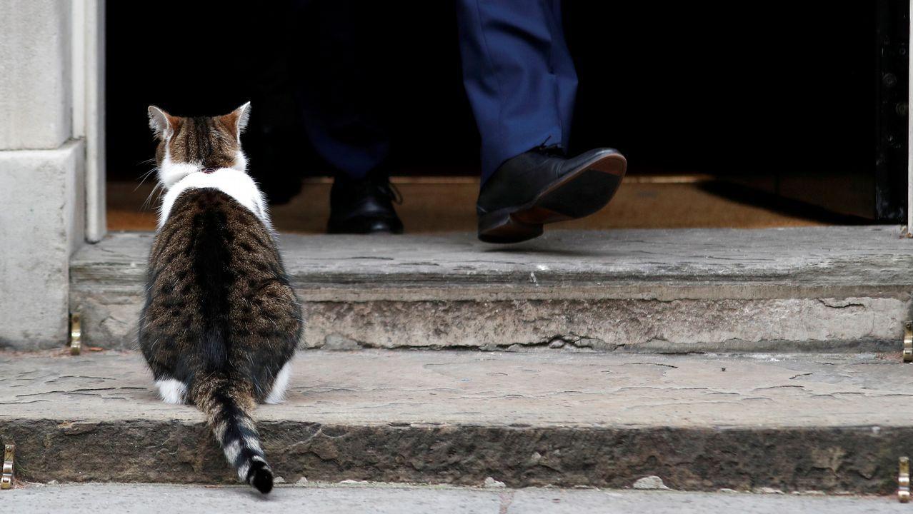 El gato Larry, que vive en el número 10 de Downing Street (la casa del primer ministro britanico), espera paciente en la puerta