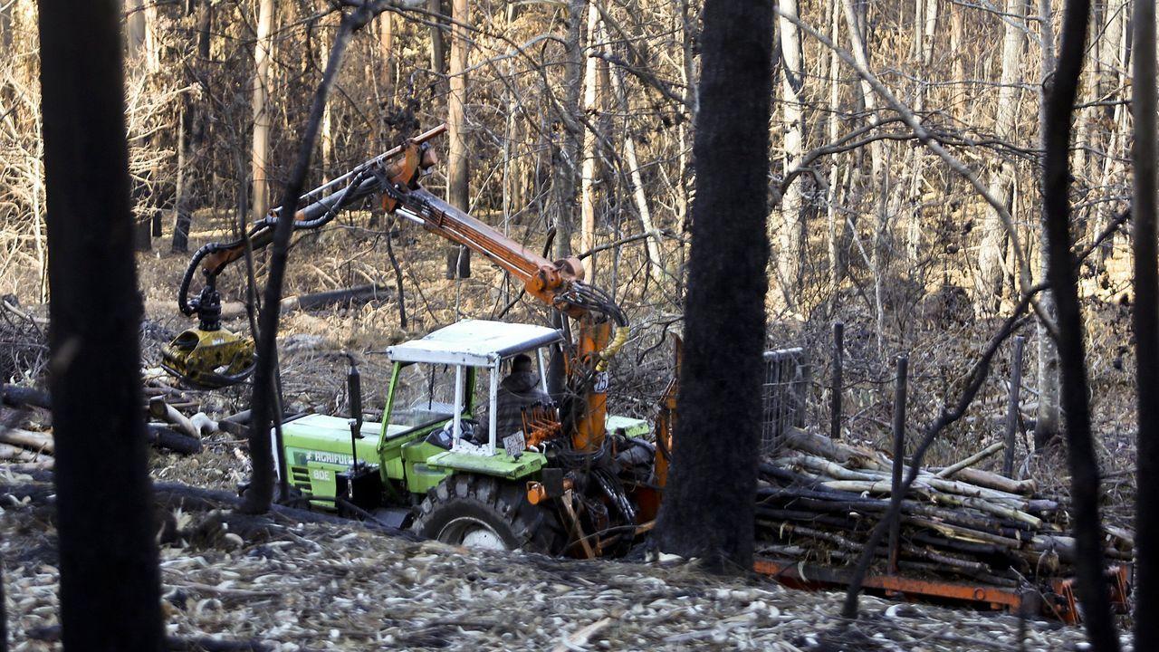 Todavía falta por retirar madera quemada en el 2017