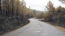 Imagen del monte quemado después del primer día de lluvias en 2006