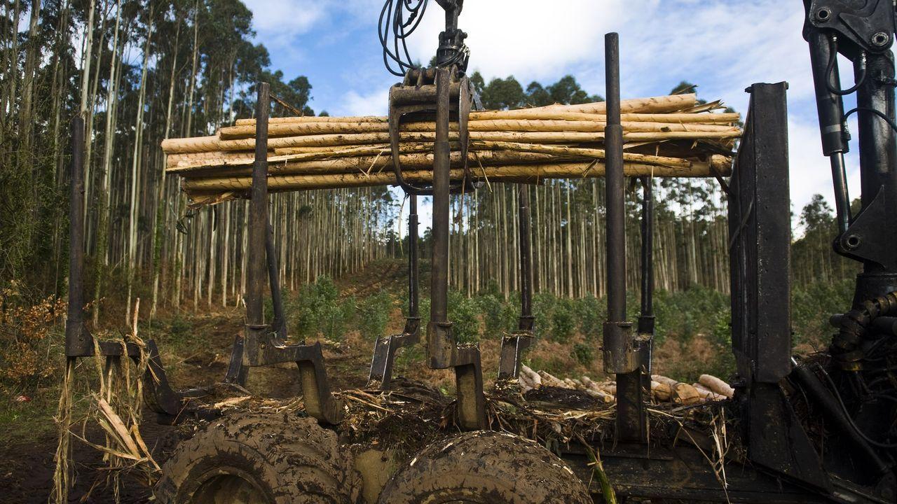 Trabajos forestales en un monte de Cedeira, en una fotografía de archivo
