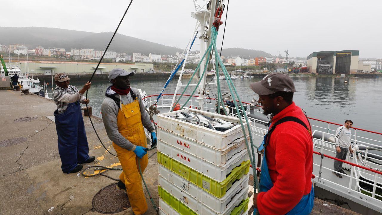 El Ana Belén llega abarrotado de xarda a Burela.Tripulantes de pesqueros como este que descargó xarda este Jueves Santo en Burela carecen de mascarillas para prevenir contagios por coronavirus