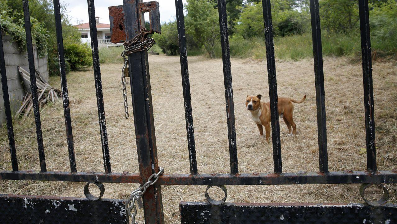 Un trozo de Xuño en la historia de Newark.La familia que okupó la vivienda ha colocado cadenas y llevado dos perros a la finca
