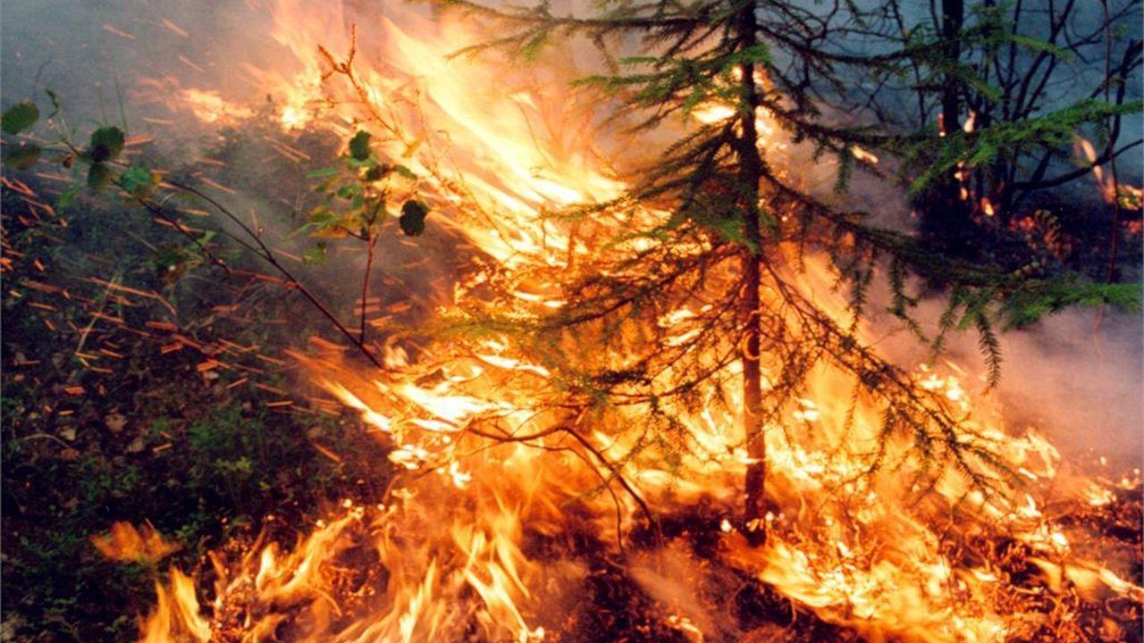 Continúa la tragedia en el Amazonas con un millón de hectáreas quemadas.Escena de «Medida por medida», obra de Shakespeare datada en los inicios del siglo XVII en un reciente montaje de la Royal Shakespeare Company dirigido por Gregory Doran