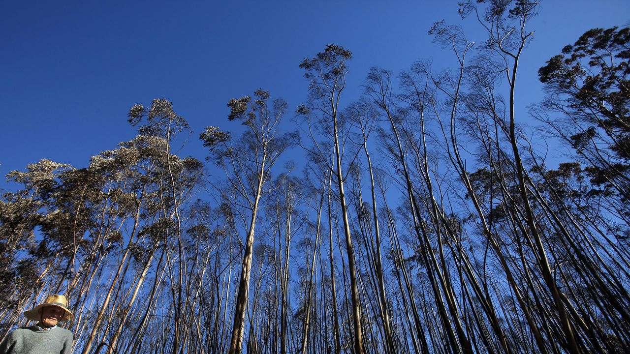 Los arbustos de boj  de Capitanía están siendo devorados por la polilla asiática