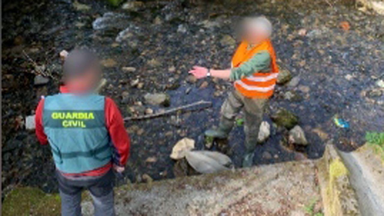 La Guardia Civil investiga la tenencia de 23 pitones en una vivienda en Outeiro de Rei.Un jabalí cruza la carretera en una rotonda de Lugo.