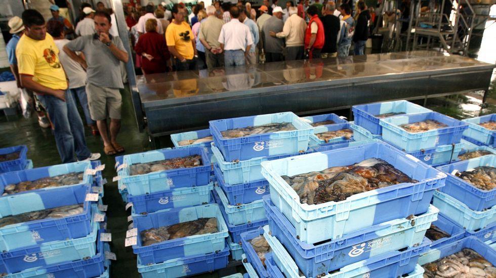 La segunda parada fijada por Marruecos a los cefalopoderos va del 15 de agosto al 15 de octubre.
