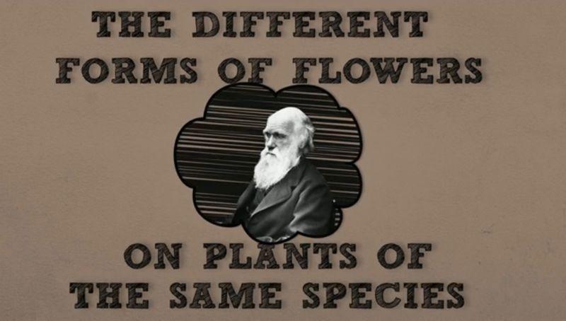La Universidad de Vigo explica las flores «favoritas» de Darwin