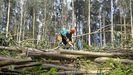 Un operario forestal trabaja en un monte de eucaliptos de Mera, en Ortigueira, en una imagen de archivo
