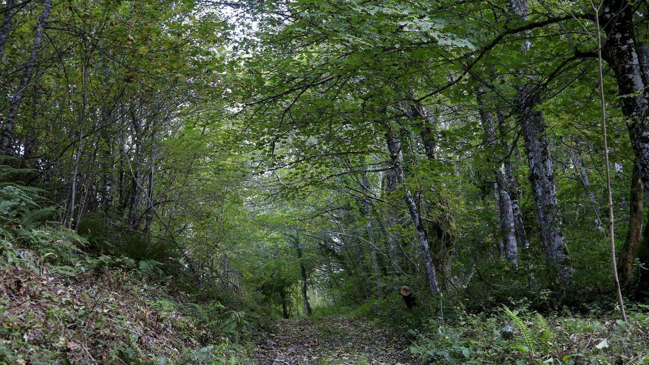 El acceso más cómodo a la zona es desde las aldeas de Agüeira o Cela