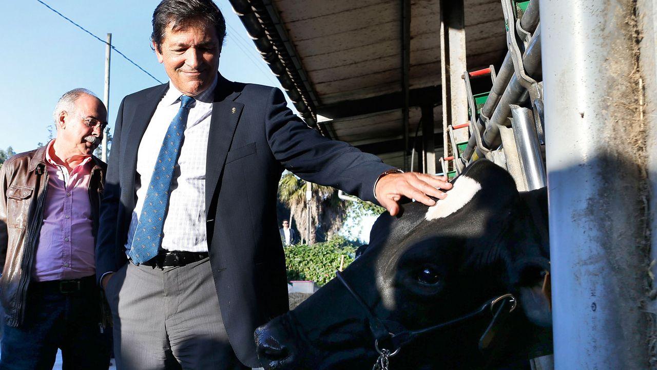 El presidente del Principado, Javier Fernández, atiende a los medios de comunicación.Javier Fernández