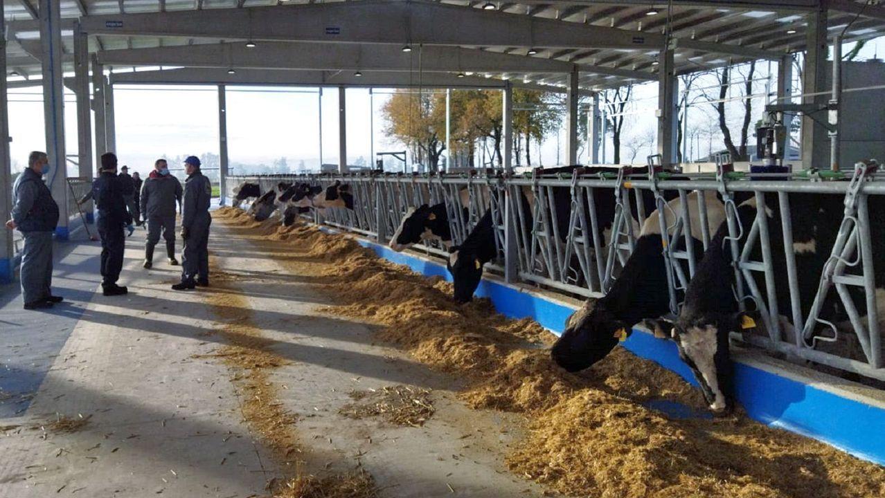 La USC proyecta la Cidade da Saúde frente al Hospital Clínico.Las primeras vacas proceden de la unidad de leche que hay en la Granja Gayoso Castro