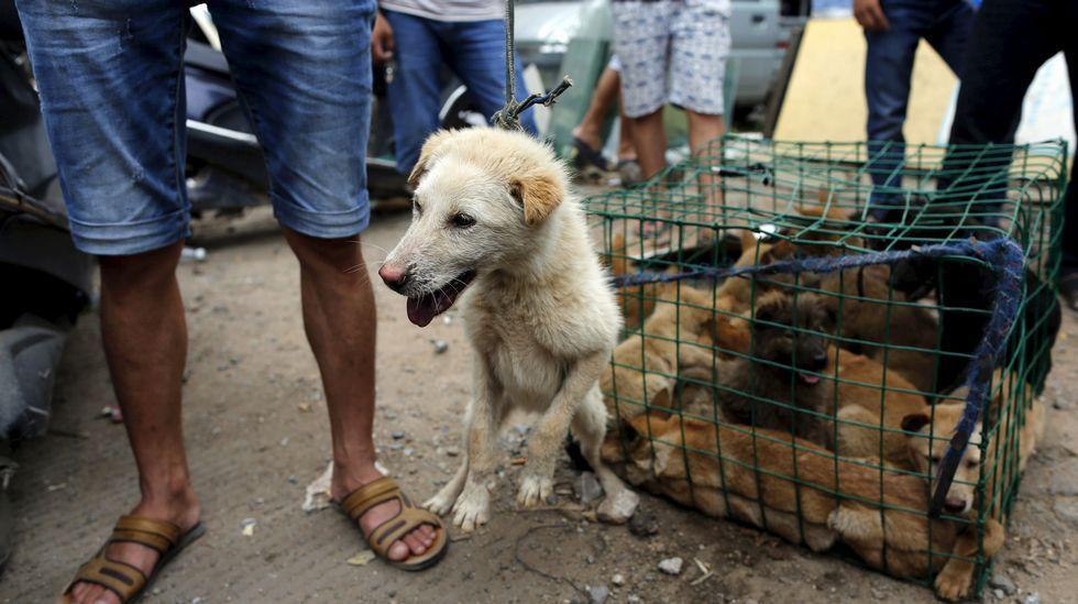 Un vendedor con un perro a la venta.