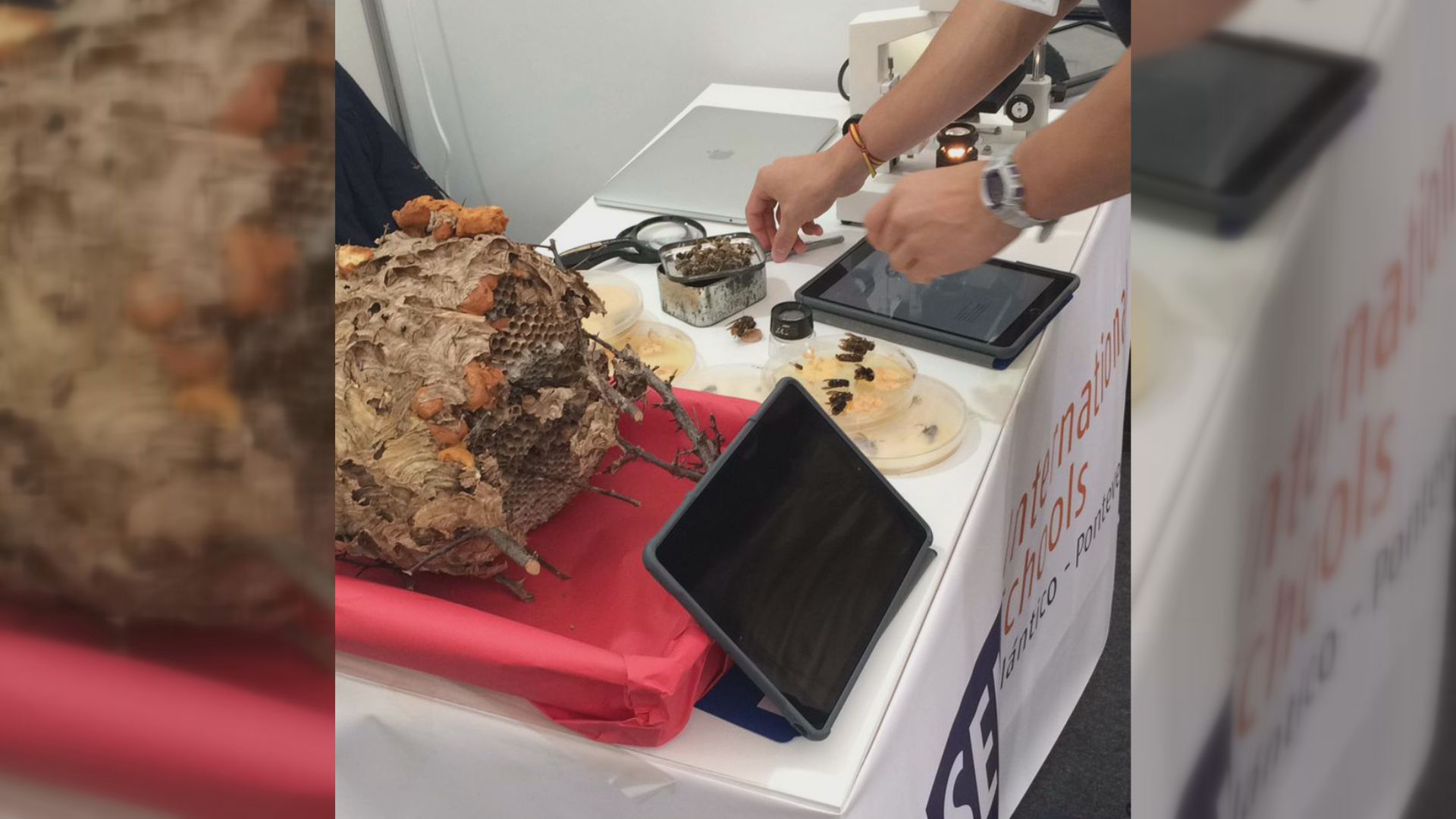 Detalle del stand de la feria Galiciencia, con un nido de velutina y placas petri con las muestras