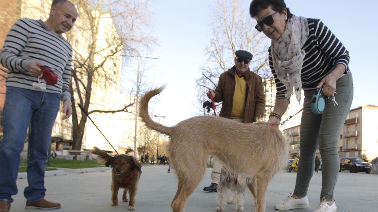 Los principales candidatos del 5A para las autonómicas.Una de las vacas, en los huesos, en la finca de Serín, en Gijón