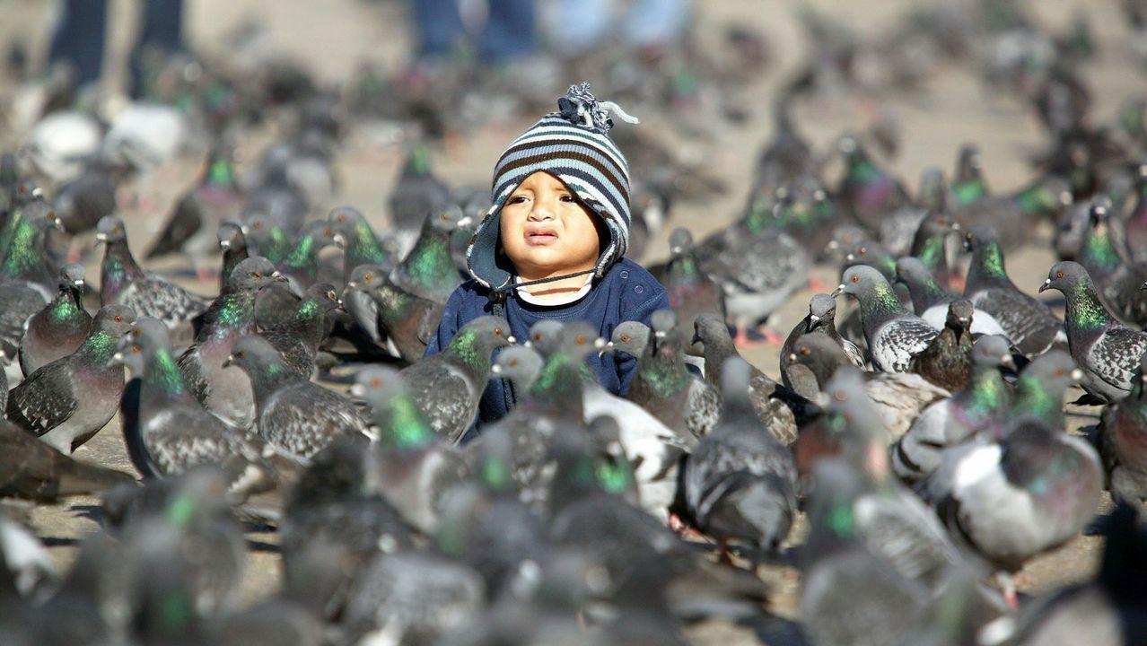 Un niño rodeado de cientos de palomas en la plaza San Marcos de Venecia