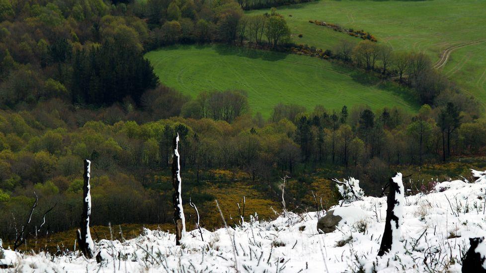 Contraste entre el verde primaveral de los prados de las zonas bajas con la nieve que cayó este viernes en la montaña de O Faro