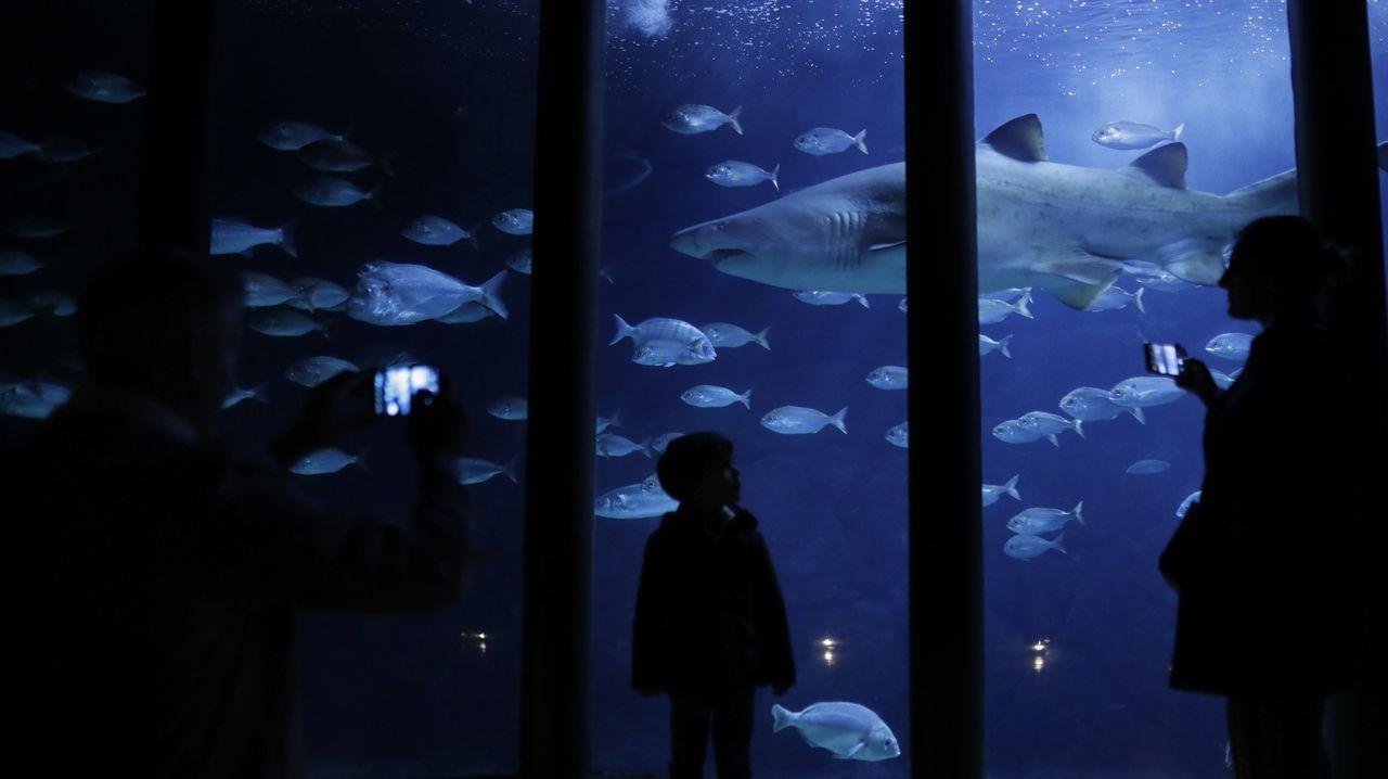 Puertas abiertas en el Aquarium