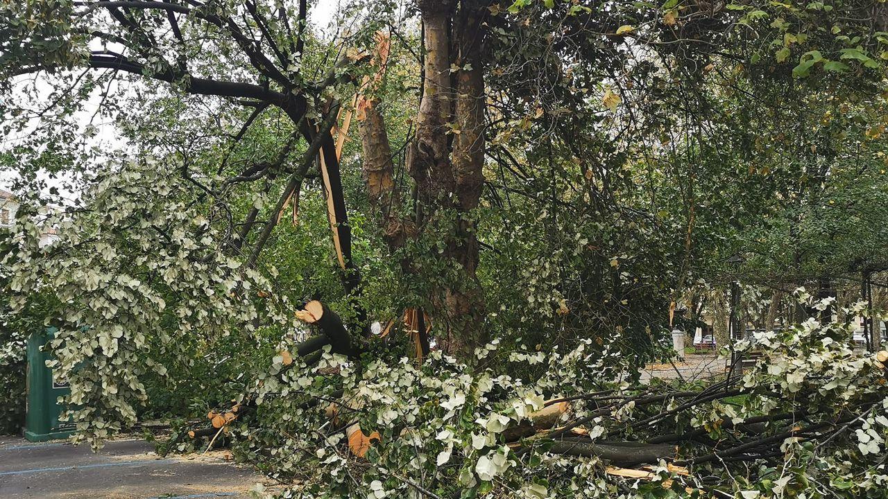 Los daños causados por el temporal de viento «Amelie»en Avilés