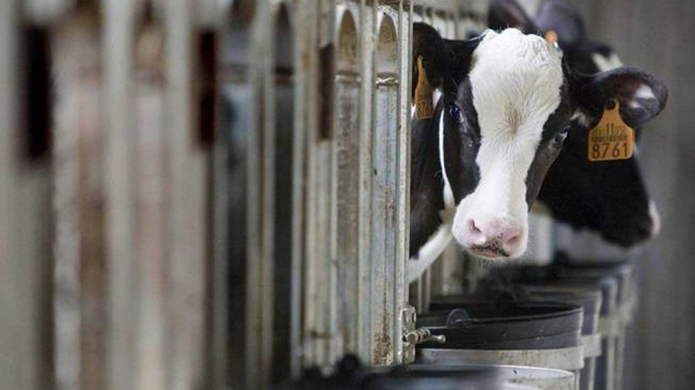 Instalaciones para producir leche de vaca ecológica.