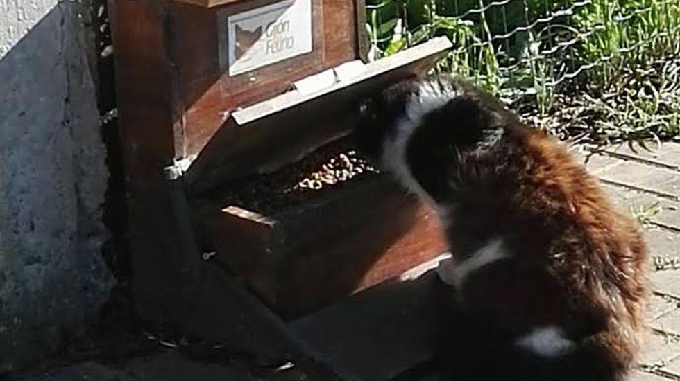 Gato comiendo en Gijón.Una colonia felina en Gijón