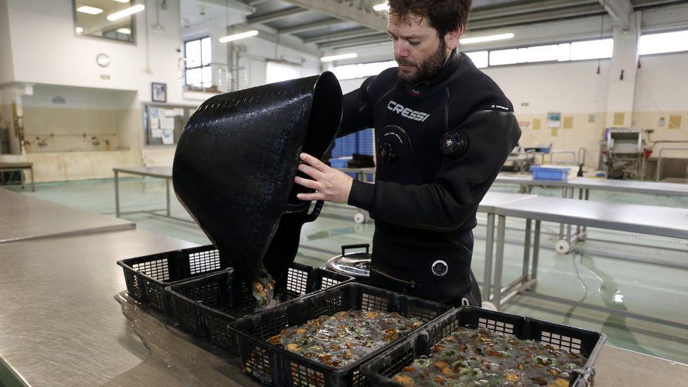 El Ría de Marín, uno de los cinco arrastreros que probararán el aparejo diseñado por Tecnopesca para limpiar el fondo marino