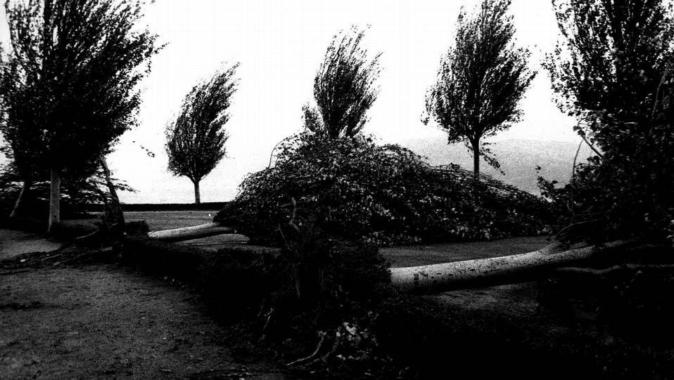 Árboles arrancados de cuajo