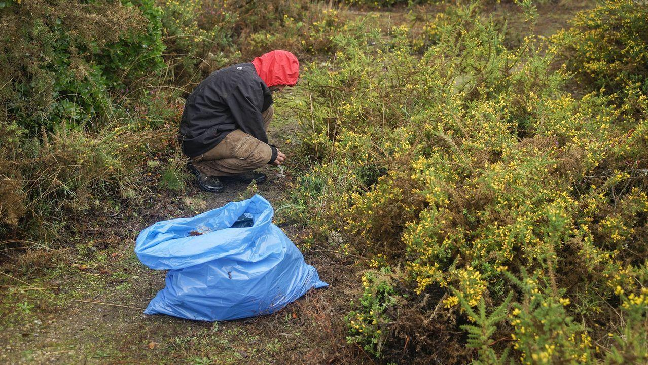 MAGOSTOS 2019.Magostos en Montealegre: Uno de los voluntarios, limpiando los restos de basura esparcidos por la zona