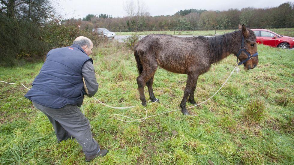 «Se me caían las lágrimas al verlos».El burro y los dos caballos ya no están en esta finca. Los trasladaron a otra más escondida.