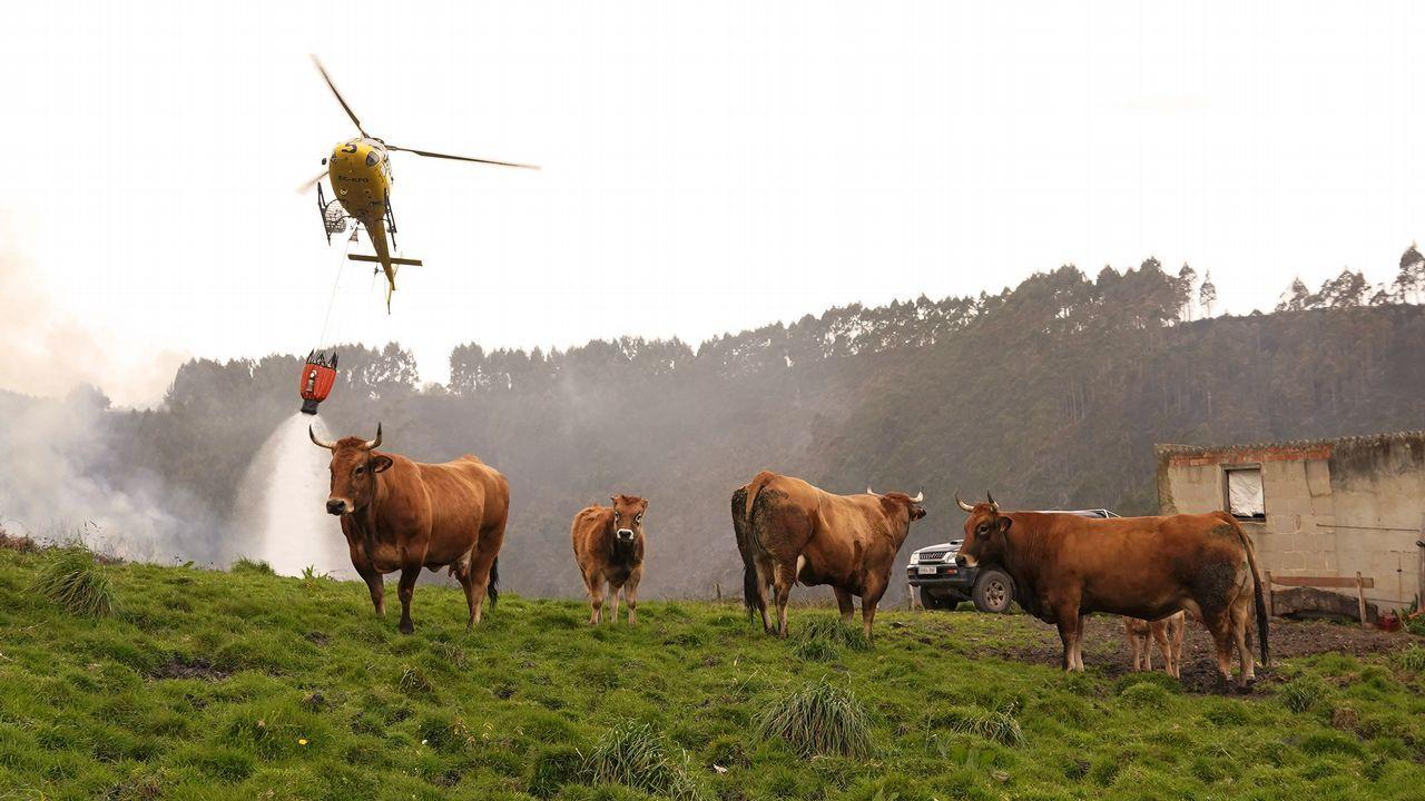 Un pirómano, cazado in fraganti en Asturias.Extinción de los incendios en Asturias