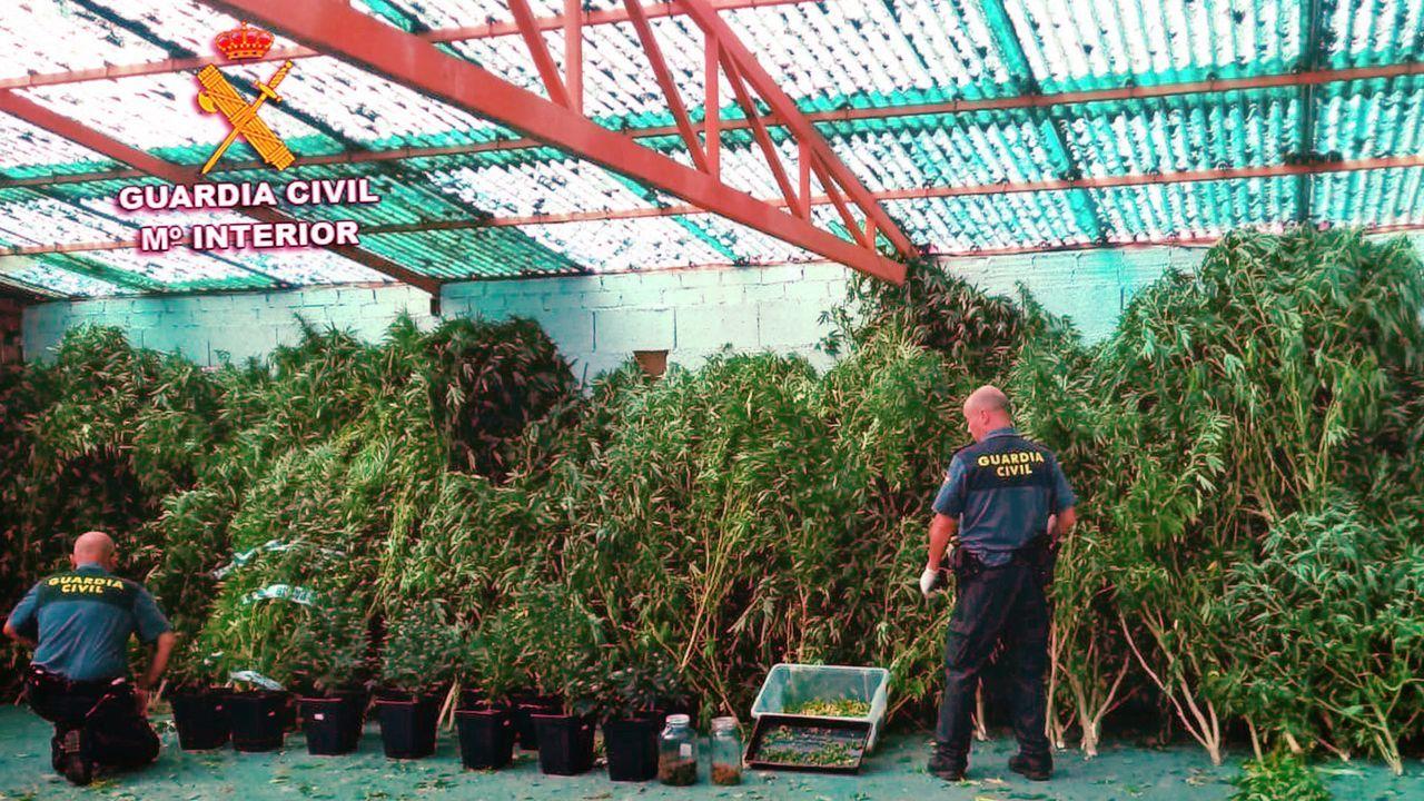 95 plantas incautadas en un galpón con otras estancias con 200 vegetales más secando